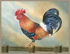 """Rooster""©    Original Watercolor painting 16 "" x 20""  Matted and Framed  $300.00  www.leonasart.com"