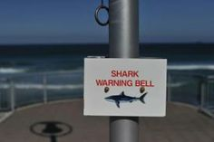 N. Zealand diver fights off shark with knife, stitches wounds