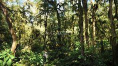 Muy cerca de Concepción se encuentra el único parque nacional que posee Tucumán: Campo de los Alisos. Es un gigante de 17.600 hectáreas que se levanta hasta los 5.300 metros sobre el nivel del mar. Lamentablemente, no se lo conoce demasiado (un buen fin de semana lo pueden llegar a visitar unas 200 personas como mucho). Pero vos no te podés perder este tesoro verde.