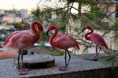 Needle Felted Bird. Flamingo.