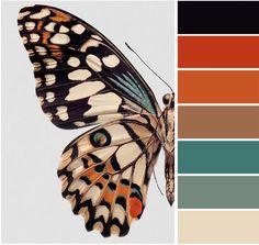 Butterfly Color Pallette