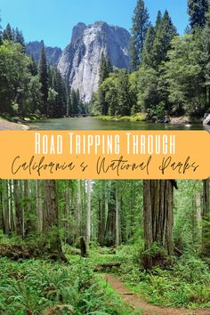 California National Parks #california #californiaroadtrip #familytravel #californiacamping #californiaadventure #visitcalifornia
