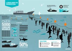 "The ""longline"" of suffering and destruction. An infographic on the impact of longline tuna fishing. For more info: http://www.greenpeace.org/international/en/news/Blogs/makingwaves/the-longline-of-suffering-and-destruction/blog/47455/"