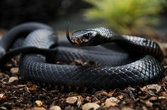 The world's most dangerous snakes (32 HQ Photos)