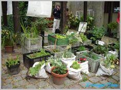Balkonda Çiçek Yetiştirme - http://www.dekorasyonadresi.com/balkonda-cicek-yetistirme/
