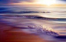 Caribbean sea violet #NewYork