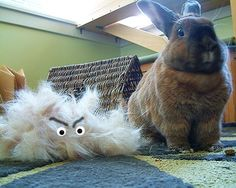 Vivian has been molting so much lately! After a few good combing sessions, we discovered a fur monster!