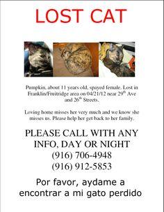 #LostCat #Sacramento Pumpkin senior female, spayed. Fruitridge/Franklin area. My cat, my baby. Please help, please repin.