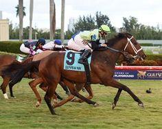 Flatlined Breaks Through in Ft. Lauderdale  https://www.racingvalue.com/flatlined-breaks-through-in-ft-lauderdale/