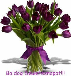 tulips garden care tulips garden care tulips garden care Oh my! Deep rich purple (for the Lords royalty) tulips Tulpen Arrangements, Flower Arrangements, Garden Care, Flower Backgrounds, Wallpaper Backgrounds, Happy Brithday, Tulips Garden, One Rose, Doodle Art
