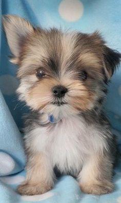 sweet little face....