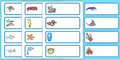 Editable Drawer - Peg - Name Labels (Sea Creatures) - Under the Sea