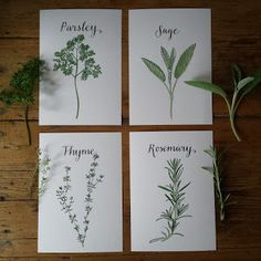 Parsley, Sage, Rosemary and Thyme :: www. Parsley, Sage, Rosemary and Thyme :: www. Sage Plant, Rosemary Plant, Plant Painting, Ink Painting, Botanical Tattoo, Botanical Prints, Floral Illustrations, Botanical Illustration, Watercolour Illustration