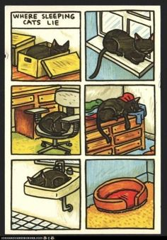 Right now, one cat is sleeping on top of the couch and the other is sleeping on top of the dryer. The only thing in the cat bed is a sock. (via For the Love of Black Cats (Black Cat Appreciation Page))