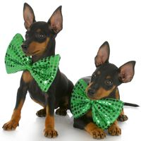St. Patty's dogs