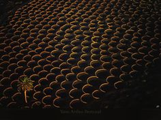 La Geria region which is on the outskirts of the Timanfaya National Park, here you can see the rows of zocos with vines growing that look like craters on the moon,
