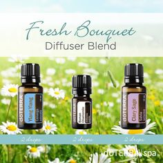 doTERRA Clary Sage Essential Oil Uses with Beauty and Diffuser Recipes Essential Oils 101, Clary Sage Essential Oil, Chamomile Essential Oil, Essential Oil Diffuser Blends, Reiki, Doterra Diffuser, Doterra Oils, Diffuser Recipes, The Fresh