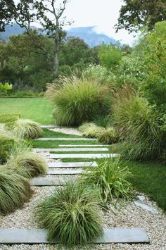 Garden in the Cape Town suburb of Constantia, South Africa. Designed by landscape designer Franchesca Watson.