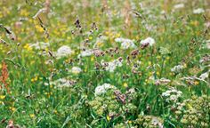Niesen, tränende Augen oder sogar Atemnot – mit dem Frühling beginnt für Pollenallergiker wieder die Leidenszeit. Diese Heilpflanzen können gegen Allergien helfen.