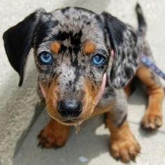 I want this sweet thing!!