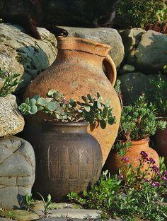 Carlingford- Templetown- The Breakers Greek Garden- by Cairlinn Garden Urns, Succulents Garden, Greek Garden, Olive Jar, Mediterranean Garden, Growing Plants, Garden Inspiration, Container Gardening, Flower Pots