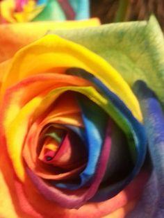 Rainbow roos # flowers # Aalsmeer