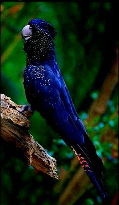 84 Ideas De Animales Animales Mascotas Pájaros De Vivos Colores