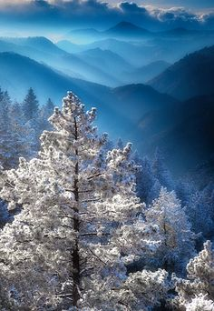 ~~Frosted Pines Clear Creek Canyon ~ Lookout Mountain, Parker, Colorado, USA by Russ Shugart~~