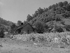 Mountaineer's cabin with tobacco patch up Morris Fork of the Kentucky River, near Jackson, Breathitt County, Kentucky. 8c13536u