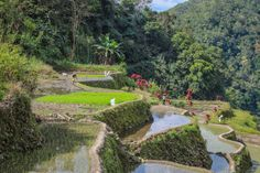 More rice paddies // Bangaan // Philippines