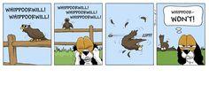WHIPPOORWILL!
