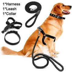 Dog Harness Leash Set,MAXIN Pet Traction Rope Heavy Duty Braided Nylon Harness Dog Leash with Chest Straps for Medium and Large Dogs.(Black) -- Want additional info? Click on the image. (This is an affiliate link and I receive a commission for the sales)