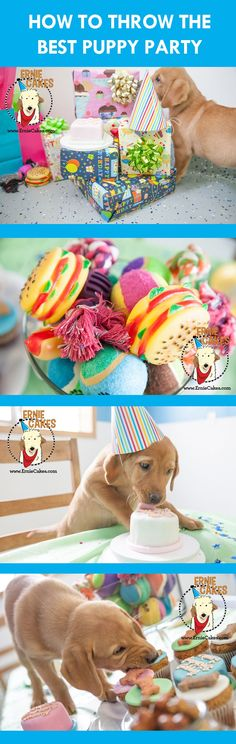 Throw your puppy a birthday party! Great tips and dog birthday cakes/treats. #puppyparty #dogbirthday