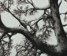 Tree - Declination XV