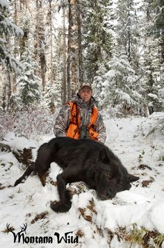 The story, .... two hunters were hunting elk, the wolf was hunting the elk and/or the hunters. One hunter came away with more than what he was after....Awesome!!!