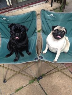 The black pug looks like Lulu! She would like her own chair on our deck.