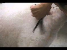 Super Styling Session Tips: Scissoring Techniques in Pet Grooming