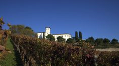 A @CastleOfAngels si giunge passando attraverso i #vigneti dell'Azienda #agricola. Colori di #autunno #location #events #beautifull #italy #sun