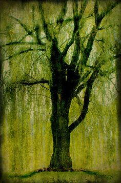 I was a willow last night in my dream I bent down over a clear running stream Sang you the song that I heard up above And you kept me alive with your sweet flowing love.  <3