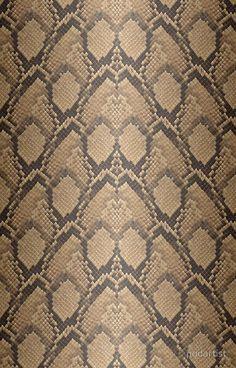 Python Snake Skin