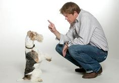 wire fox terriers famous - Google Search