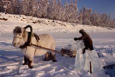 The Yakut horse on work.