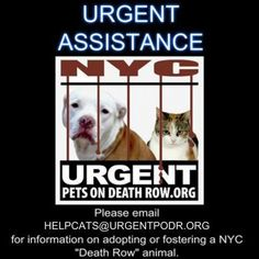 URGENT CAT HELP DESK - - Info **PLEASE NOTE OUR NEW HELP DESK EMAIL ADDRESS**HELPCATS@URGENTPODR.ORG** Please Share: - Click for info & Current Status: http://nyccats.urgentpodr.org/help-is-here/