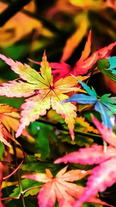 Flowers Wallpaper Autumn 61 New Ideas Fall Pictures, Pretty Pictures, Iphone 6 Wallpaper, Damask Wallpaper, Wallpaper Ideas, Screen Wallpaper, Wallpaper Quotes, Autumn Scenery, Belle Photo