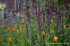 Vrolijke, kleurige beplanting voor de gezamenlijke tuin 'De Omscholing' Rotterdam van Marilene Vermeulen van Tuinatelier Herman & Vermeulen.