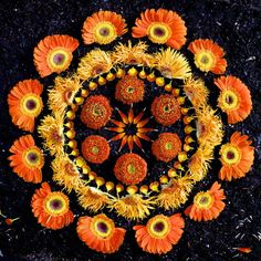 Artist's wildflower mandalas are divine offerings from nature : TreeHugger