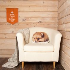 Pomeranian Puppy Pillow, $35 | 17 Gifts For People Whose Best Friend Is A Pomeranian