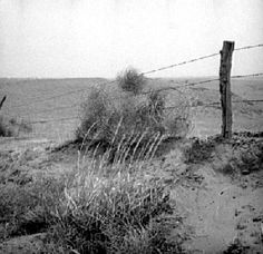 """A tumbleweed up against a """" silk fence """" (barbed wire) Cowboy Slang & Phrases. very cute website arranged by alphabet. Cute Website, Slang Phrases, Loving Texas, First Novel, Old West, Fence, Westerns, Writer"""