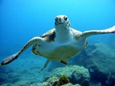 Swim with turtles in Tenerife with Must Cat