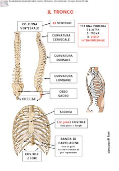 Yoga Anatomy, Human Anatomy, Human Body Activities, Italian Lessons, Jim Carrey The Mask, Anatomy And Physiology, Science For Kids, Learn English, Medicine